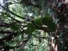 Hiking Tai Lam C3083c361488128