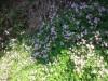 菜園村 圭角山  Caffa5378411810